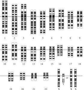 genetics-chromosoems